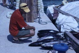 andy with endangered species bluefin tuna