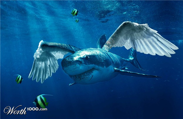 Great white with wings fish navy films for Wings and fish