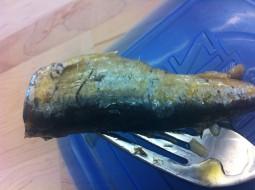 Sardine on Fork