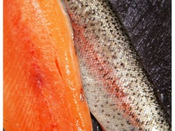 rainbow trout and fillet