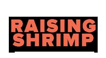 raising-shrimpclean