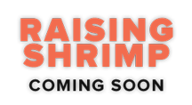 Raising Shrimp coming soon