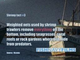 trawler damage fact