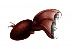 Vampire squid side view