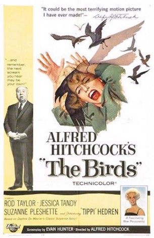 The Birds- a film about toxic seafood