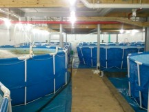 production pools at the Big Barn Shrimp Farm