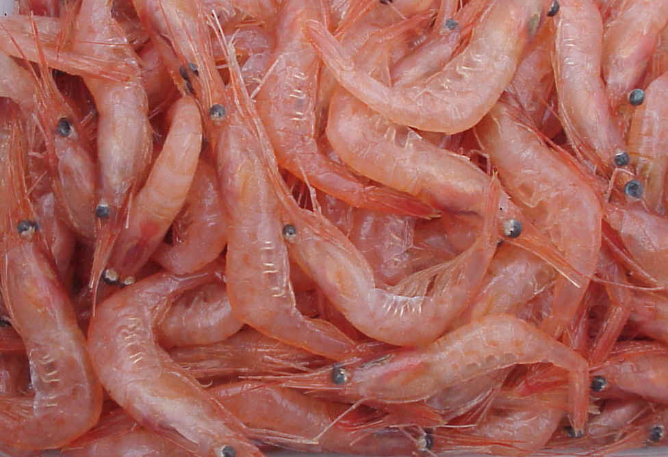 Eat this not that: a guide to shrimp - Fish Navy Films
